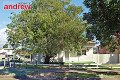 Property photo of 35 Gould Street Campsie NSW 2194