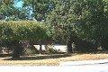Property photo of 47 Cawston Road Attadale WA 6156