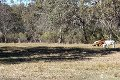 Property photo of LOT 2 Unold Lane Dalcouth QLD 4380