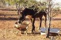 Property photo of 179 Heffernan Road Alice Springs NT 0870