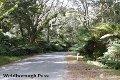 Property photo of LOT 4 Mount Paris Dam Road Weldborough TAS 7264