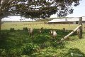 Property photo of 834 Tumoulin Road Kaban QLD 4888