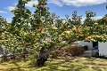 Property photo of 150 St Helens Point Road Stieglitz TAS 7216