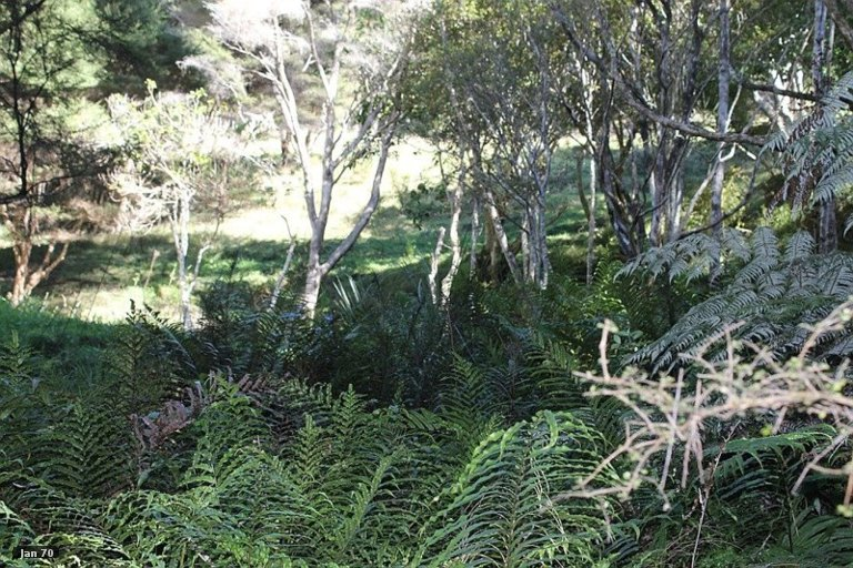 Property photo for 86 Summer Road, Tinopai, 0593