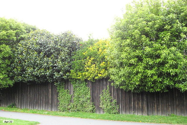Property photo for 220 Clyde Road, Burnside, Christchurch, 8053