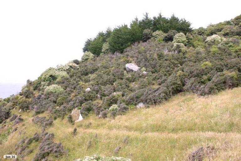 Photo of property in 130 Horseshoe Point Road, Stewart Island / Rakiura, Stewart Island, 9818
