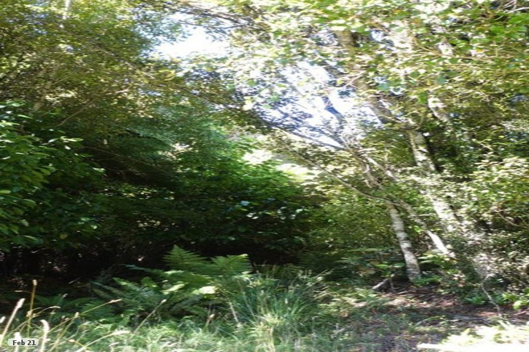 Photo of property in 160 Horseshoe Bay Road, Stewart Island / Rakiura, Stewart Island, 9818