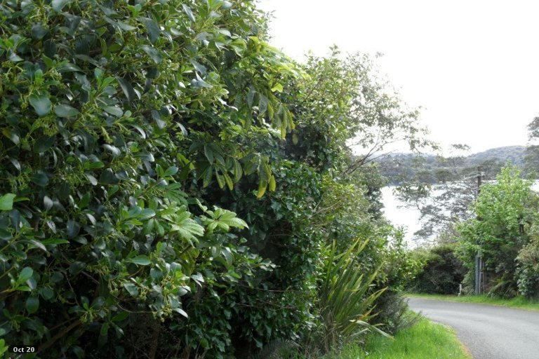 Photo of property in 16 Petersons Hill Road, Stewart Island / Rakiura, Stewart Island, 9818